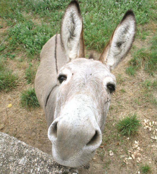 Family Day Out - Donkey Derby in Easingwold this September