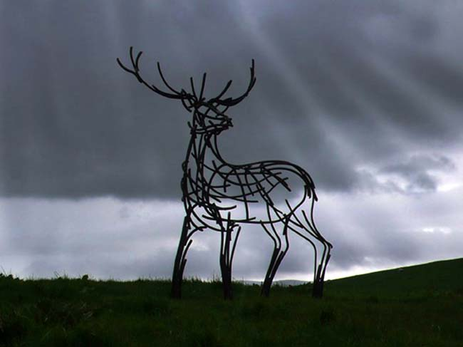 Watchful Stag - by Andrew Kay - photograph courtesy of NYOS