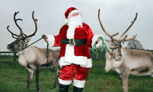 Santa getting his reindeer ready for Harrogate Christmas