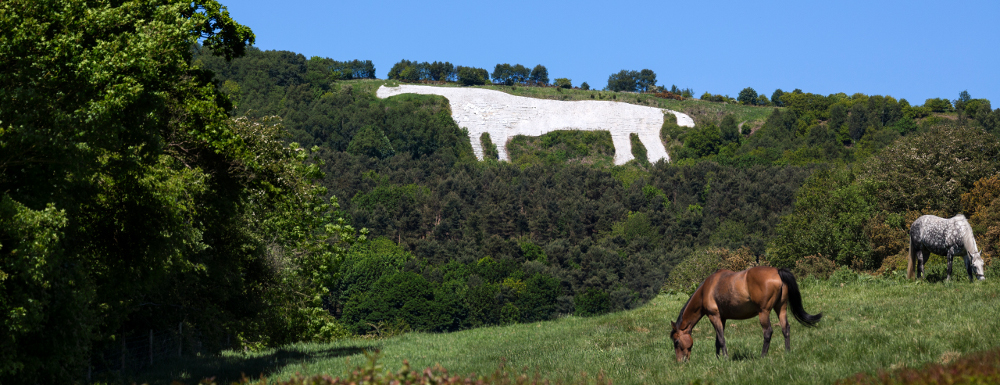 image of the kilburn white horse on the hill with real horses grazing in the foreground
