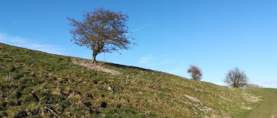 Wharram Percy medieval village site