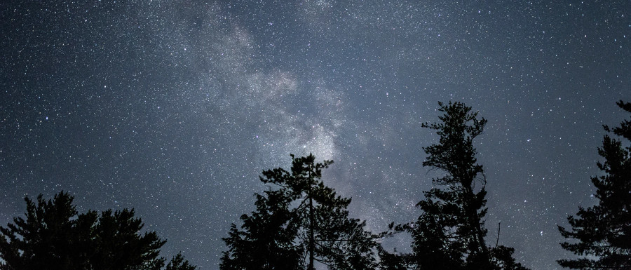 stars in the night sky above trees