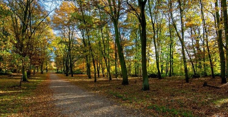 autumnal yorkshire woodland walk